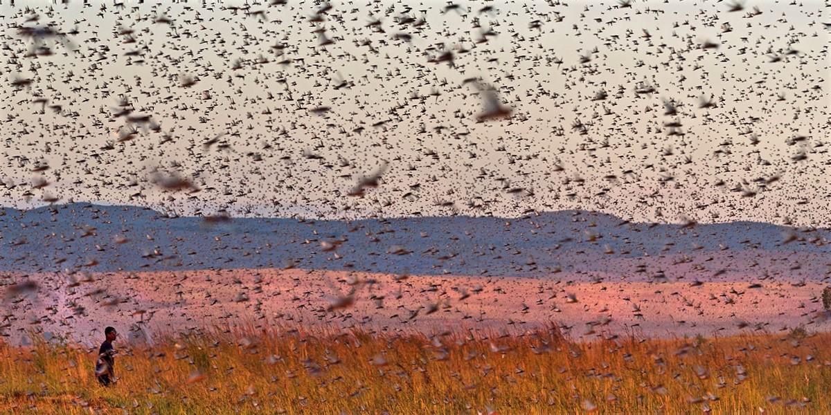 droni_deserto_Mauritania_locust